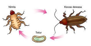 1. Daur Hidup Serangga | Serunya Belajar Ilmu Pengetahuan ...